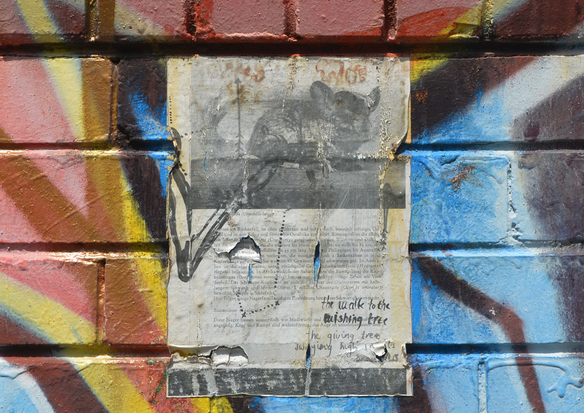 page from a book written in German that has been pasted onto a wall that is painted with multicoloured graffiti. The book page is about chinchillas and has a picture of a chinchilla on the top third of the page. Someone has written in black marker over it,