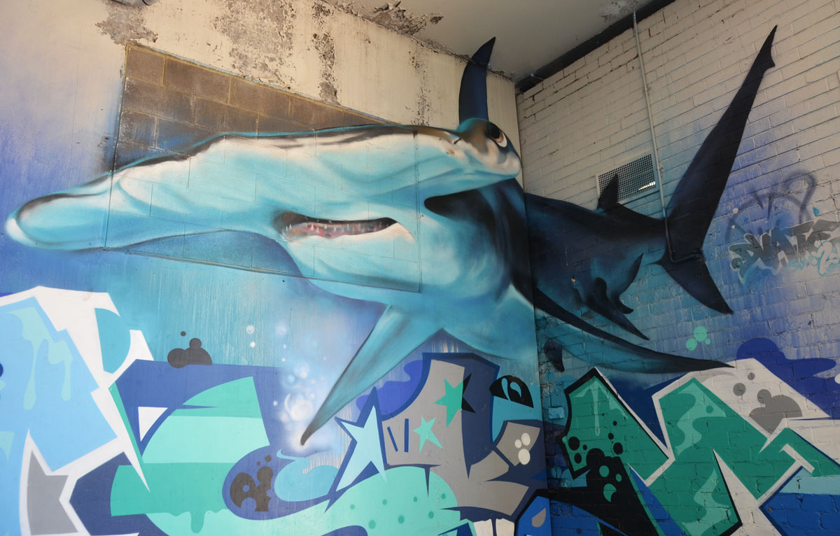 street art painting of a shark on an inside corner of a wall in a car park