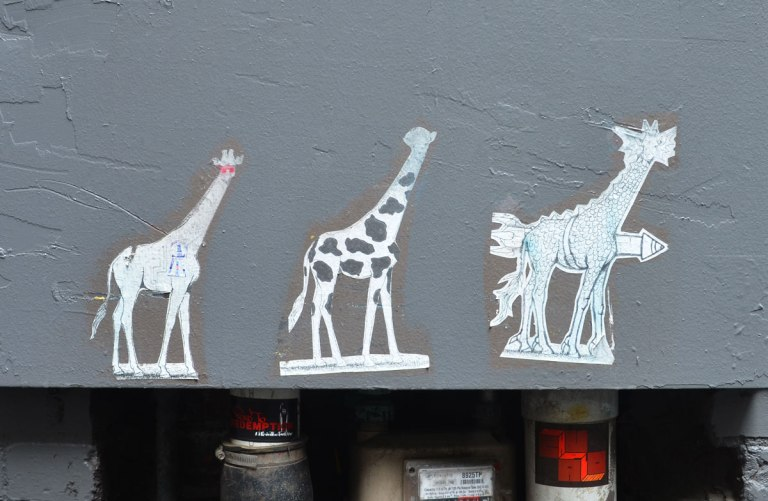 three paste up giraffes on a bluish grey wall, above a section of large pipes.