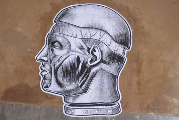 black drawing on white, paper paste up street art, man's head and neck in profile, no skin, shows the muscles of the face and neck. with part of the skull removed to reveal the brain. By SNEM