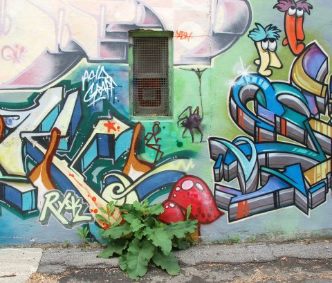 part of an Alice in Wonderland mural in a Montreal alley, looking down along the wall that the mural is on - red mushrooms at the bottom of the picture so it looks like they are growing in the alley. They are partially obscured by green weeds that have grown in front of the painting.