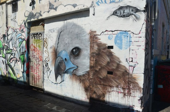 mural of a large bird head, light grey head, blue and black beak, brown body feathers, sign by sugar, on a white wall in an alley