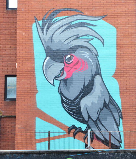 simple mural of a grey toned cockatoo with a pink patch on its face, on a turquise background