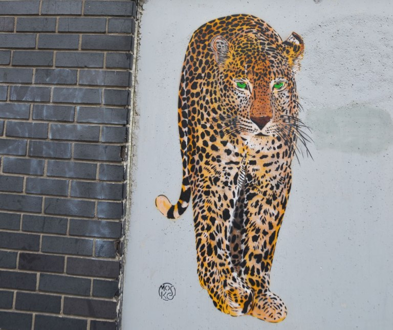 pasteup graffiti of a very realistic leopard drawn in oranges and black, almost life size, walking directly at the viewer