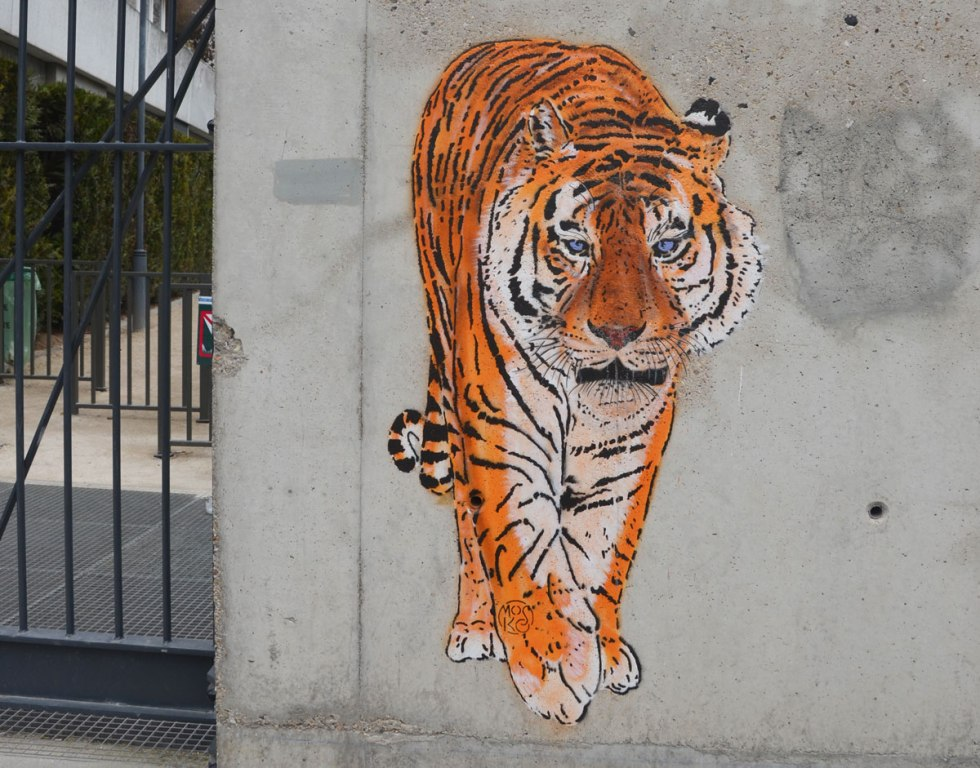 pasteup graffiti of a very realistic tiger drawn in oranges and black, almost life size, walking directly at the viewer