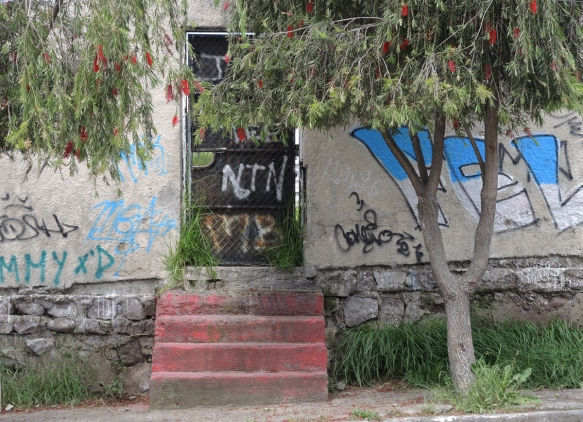 faded red concrete steps leading to a black door with a metal grille covering it,also some graffiti tags. Two bottle brush trees are in front with their red flowers