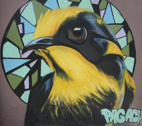 mural in Quito Ecuador , realistic painting of a bird with a black and yellow head.
