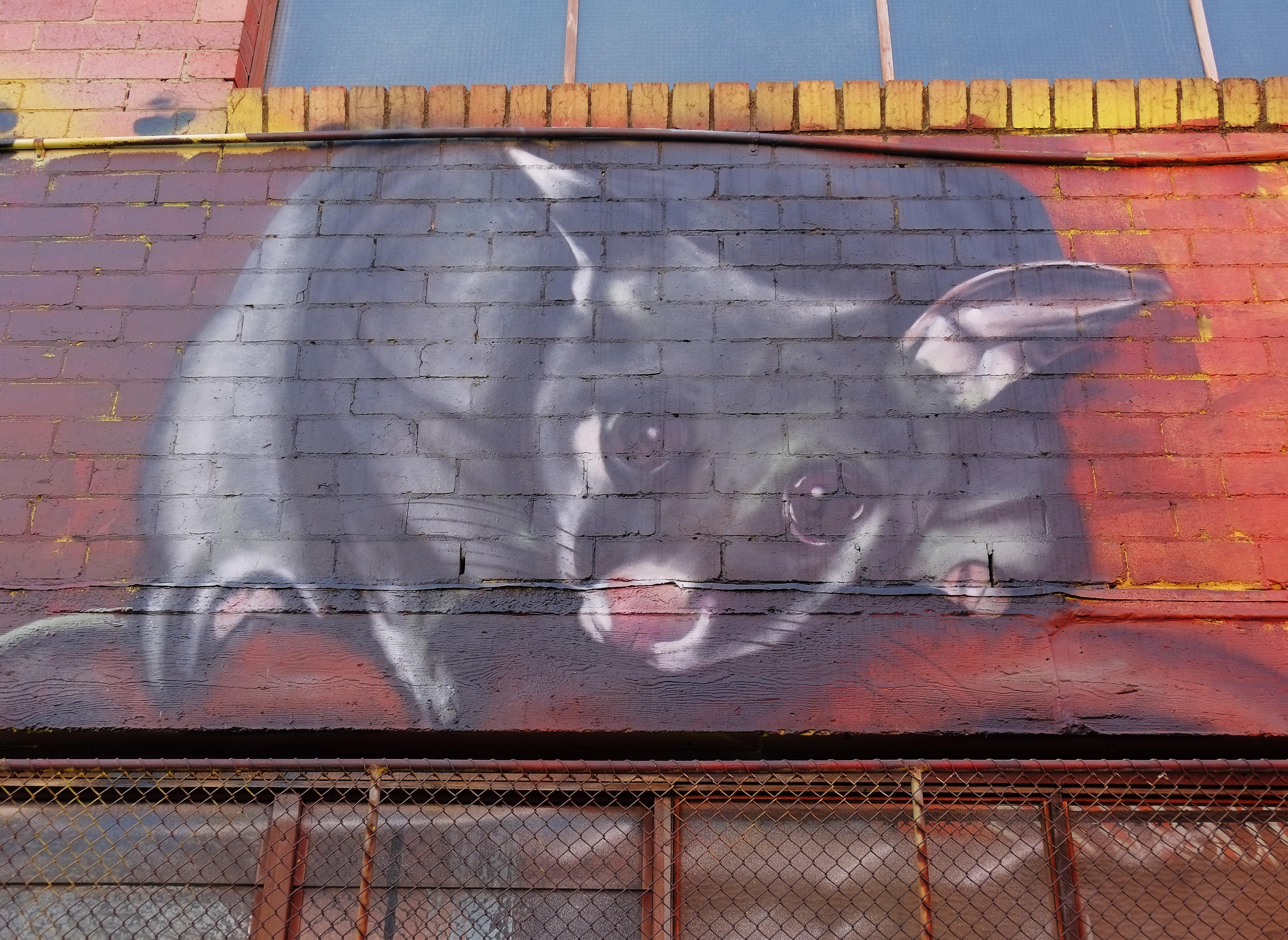 street art mural of a sugar glider, a small rat-like rodent