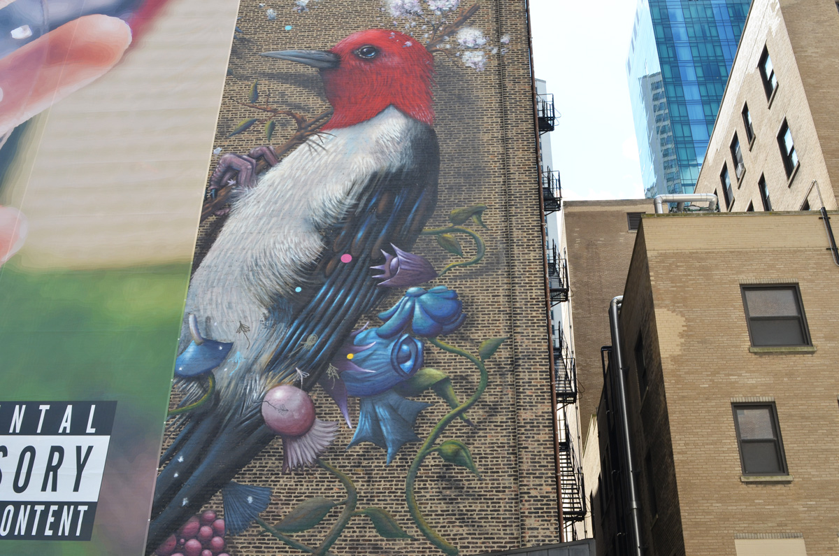 part of a mural, a large red head woodpecker, but rest of mural has been covered over by a large ad