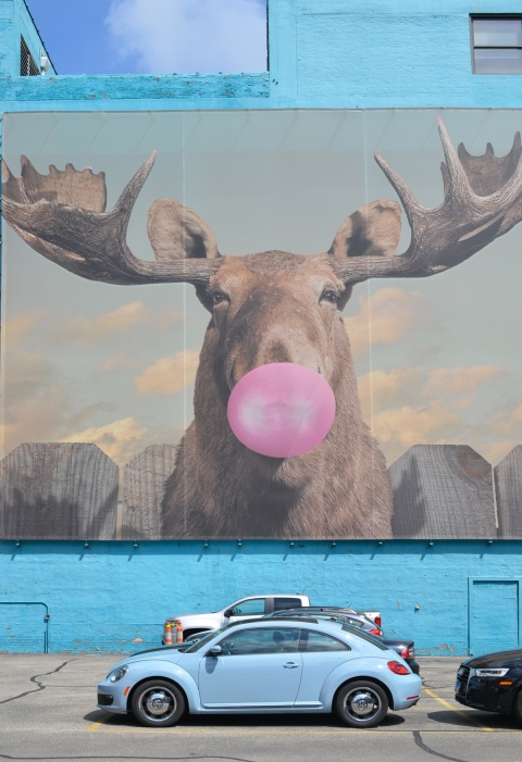 large mural of a moose blowing a big pink bubble with bubble gum